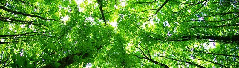 Ein Laubwald vertikal fotografiert, man sieht die Sonne durch das Blätterdach