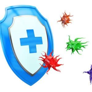 Eine grafische Darstellung eines Schildes und von Viren (Immunabwehr)