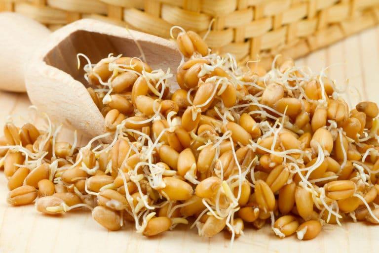 Weizenkeime auf einem Tisch